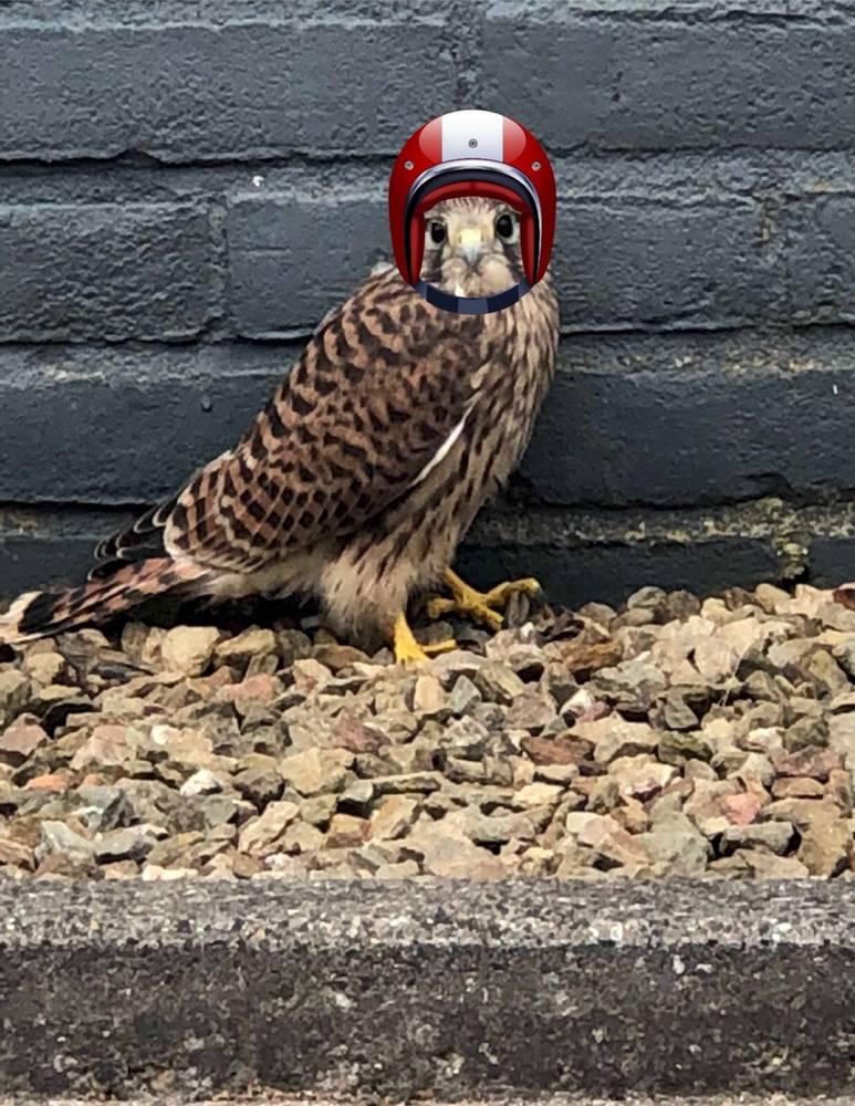 Vanaf januari 2019 helm verplicht